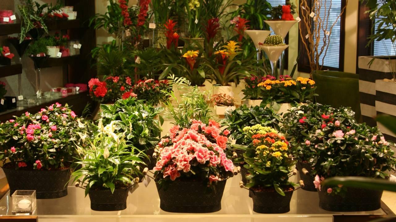 Um den veränderten Bedingungen in den Golfstaaten gewachsen zu sein, plant Alissar Flowers, im nächsten Jahr nach Südostasien zu expandieren.
