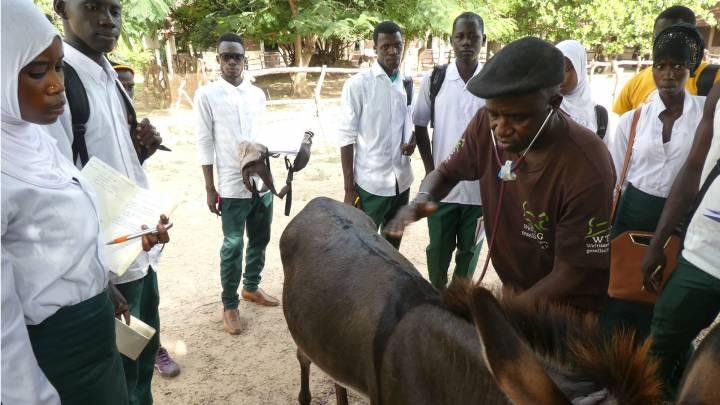 Dr. Kebba Daffeh versteht sich als Anwalt der Tiere und Menschen