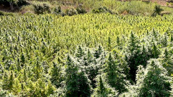 marijuana-morocco-rif-stian-overdahl-cover