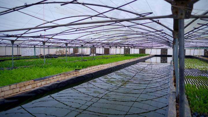 Agrimatic's farm on the outskirts of Cairo.