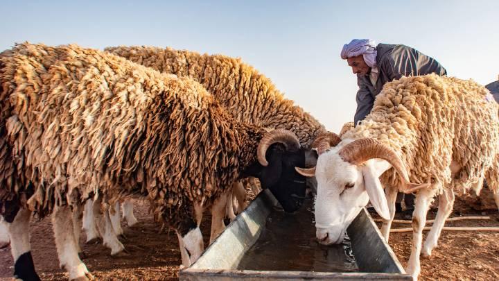 Klimawandel in der Sahara