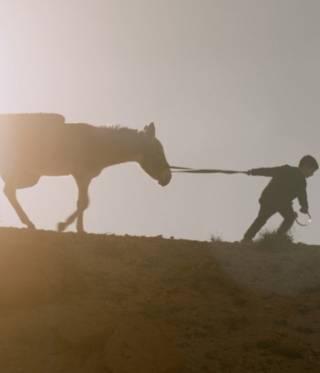 Vier Filme aus der arabischen Welt nominiert für die Oscars 2020