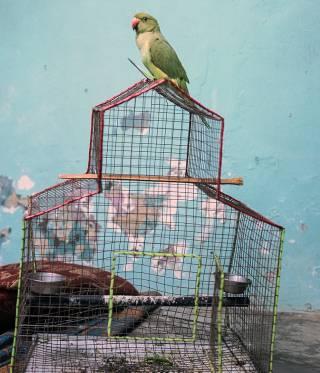 Ausstellung Mémoire Temporelle des Fotografen Kalpesh Lathigra